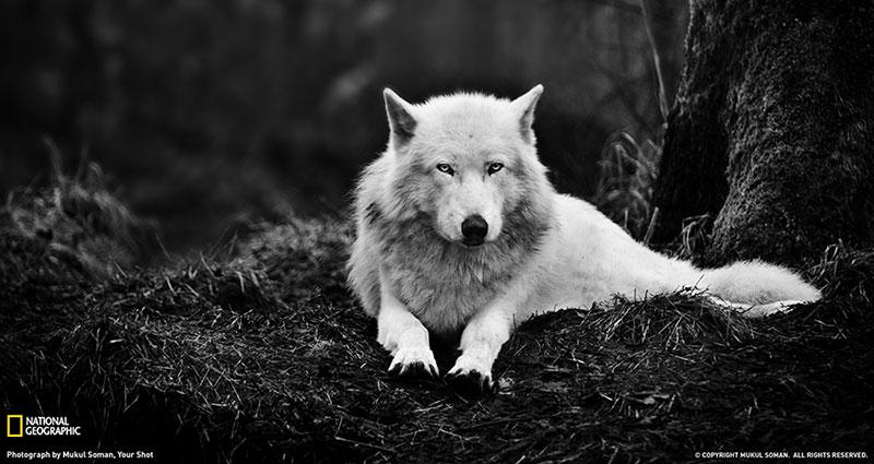 انسان گرگ انسان است