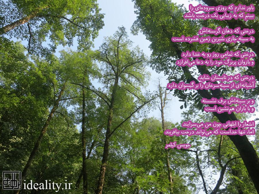 درخت. تنها خداست که میتواند درخت بیافریند
