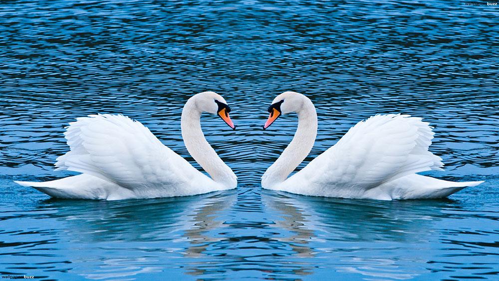 قوی زیبا ... چو روزی از آغوش دریا برآمد، شبی هم در آغوش دریا بمیرد